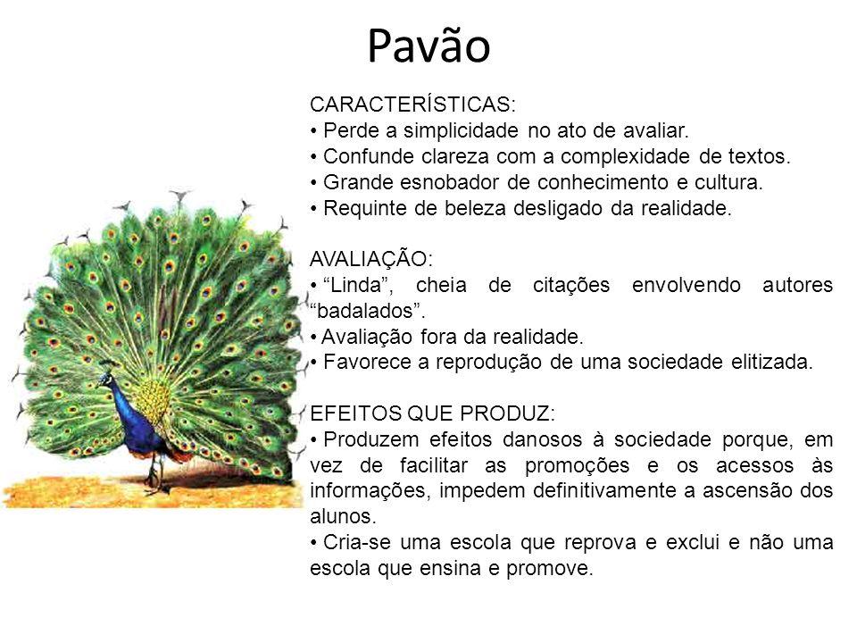 Pavão CARACTERÍSTICAS: Perde a simplicidade no ato de avaliar.