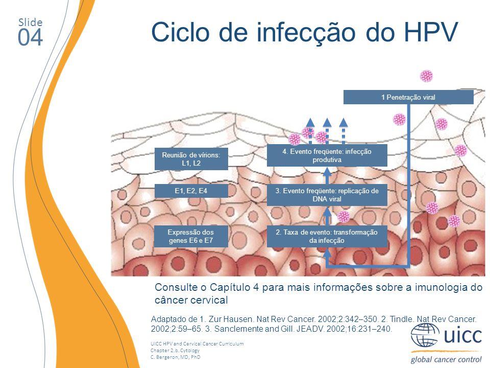 Ciclo de infecção do HPV