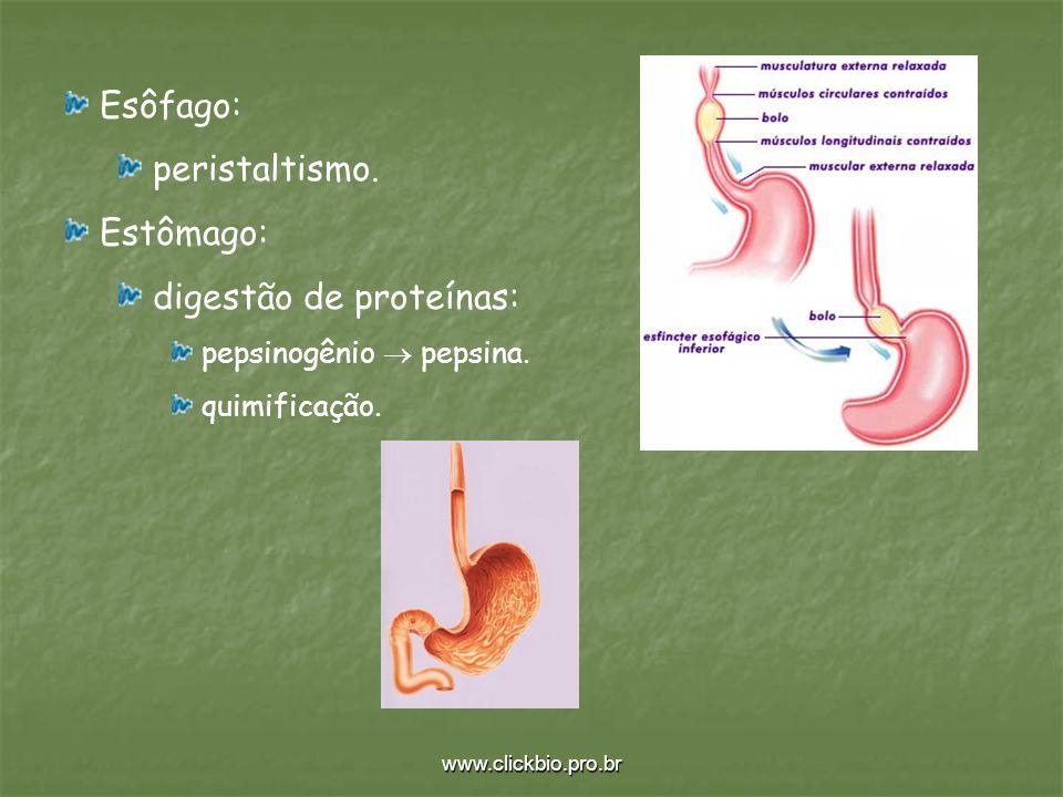 digestão de proteínas: