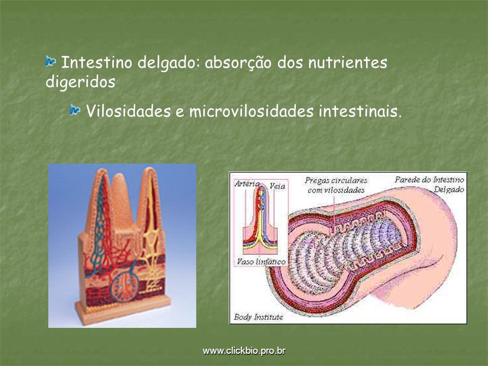 Intestino delgado: absorção dos nutrientes digeridos