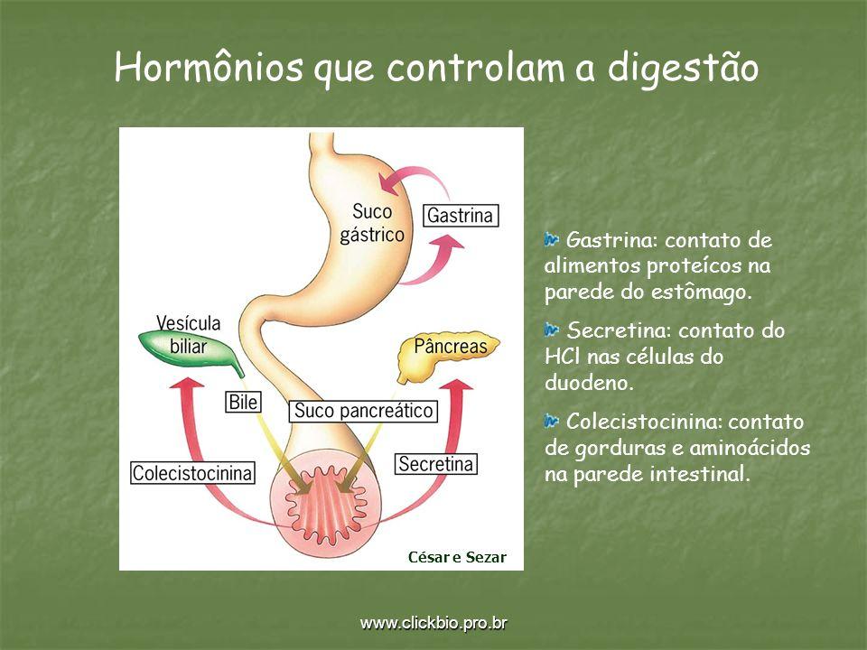 Hormônios que controlam a digestão
