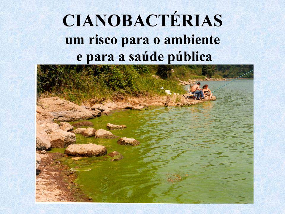 CIANOBACTÉRIAS um risco para o ambiente e para a saúde pública