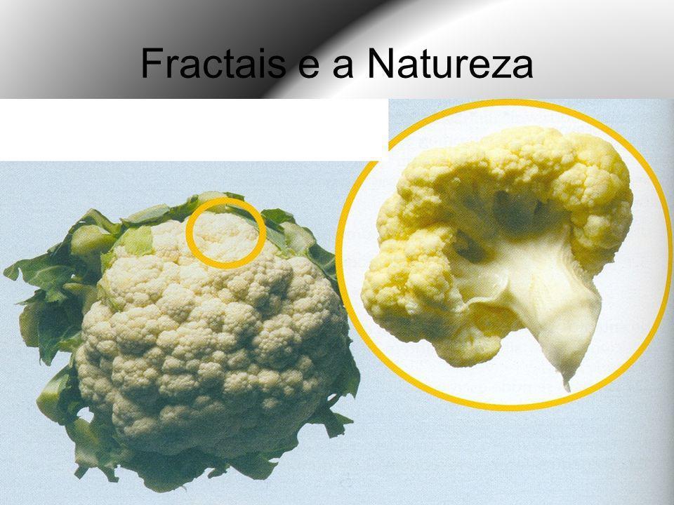 Fractais e a Natureza