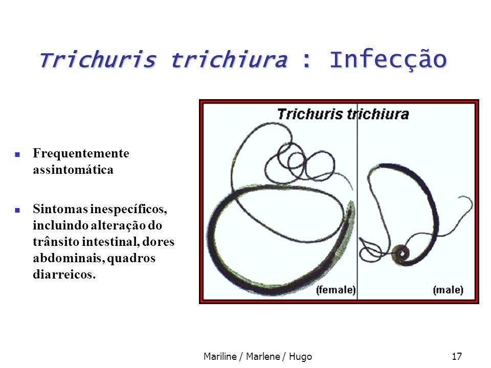 Trichuris trichiura : Infecção