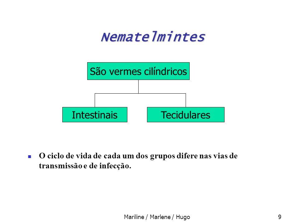 Nematelmintes São vermes cilíndricos Intestinais Tecidulares