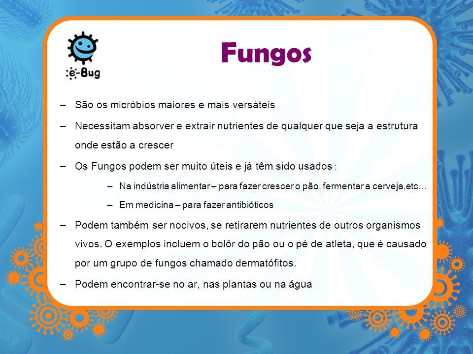Fungos São os micróbios maiores e mais versáteis