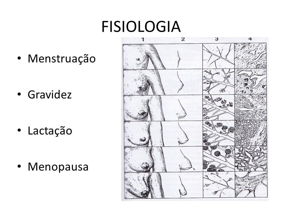 FISIOLOGIA Menstruação Gravidez Lactação Menopausa