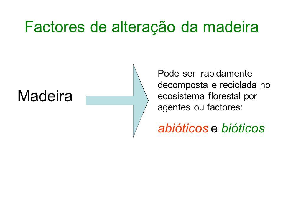 Factores de alteração da madeira