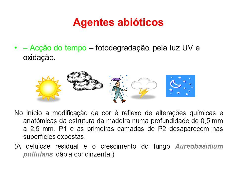 Agentes abióticos – Acção do tempo – fotodegradação pela luz UV e oxidação.