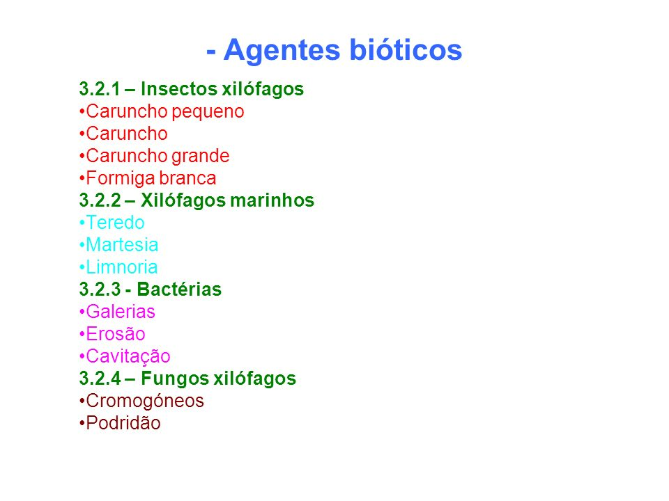 - Agentes bióticos 3.2.1 – Insectos xilófagos Caruncho pequeno