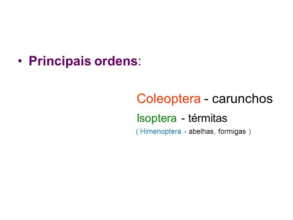 Coleoptera - carunchos Isoptera - térmitas