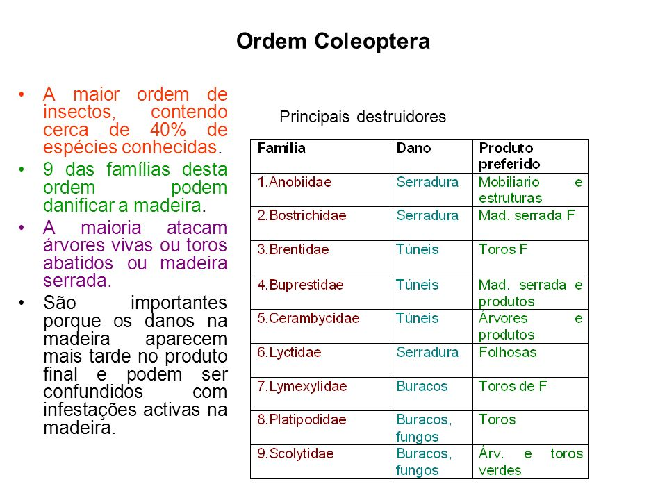 Ordem Coleoptera Principais destruidores. A maior ordem de insectos, contendo cerca de 40% de espécies conhecidas.