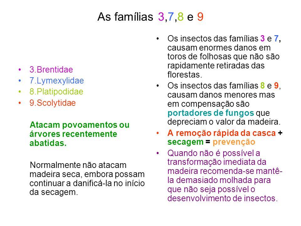 As famílias 3,7,8 e 9 Os insectos das famílias 3 e 7, causam enormes danos em toros de folhosas que não são rapidamente retiradas das florestas.