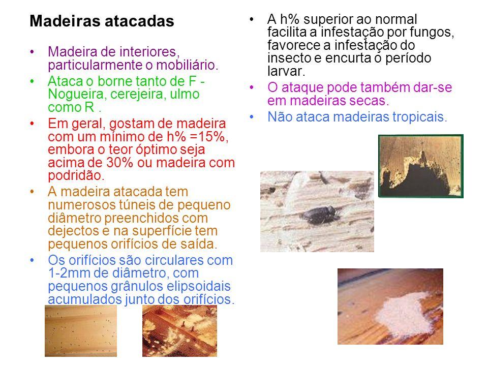 Madeiras atacadas Madeira de interiores, particularmente o mobiliário. Ataca o borne tanto de F -Nogueira, cerejeira, ulmo como R .
