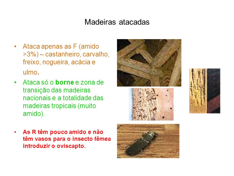 Madeiras atacadas Ataca apenas as F (amido >3%) – castanheiro, carvalho, freixo, nogueira, acácia e ulmo.