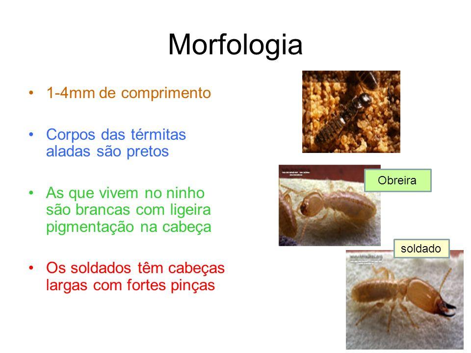 Morfologia 1-4mm de comprimento Corpos das térmitas aladas são pretos