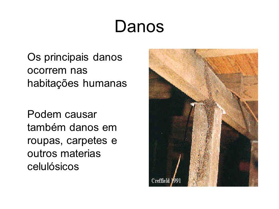 Danos Os principais danos ocorrem nas habitações humanas