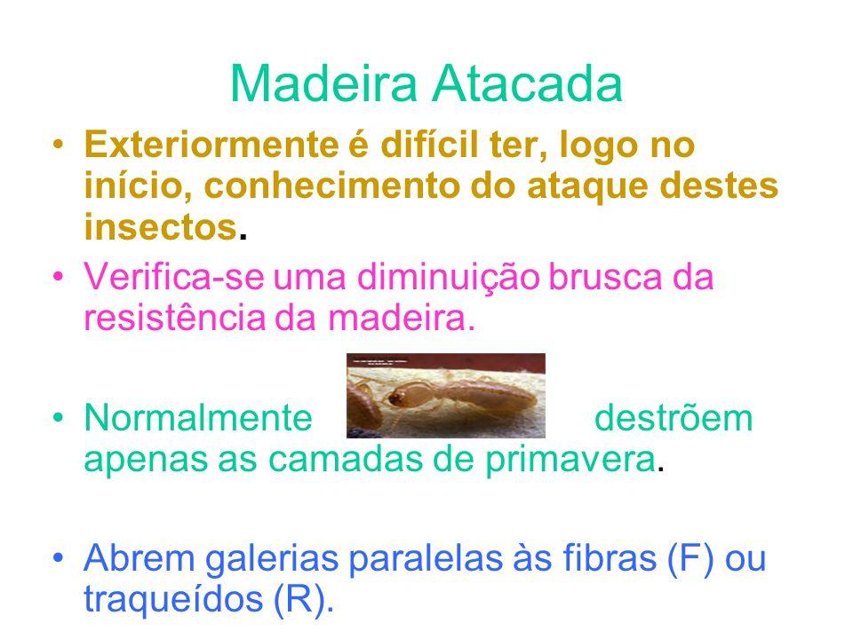 Madeira Atacada Exteriormente é difícil ter, logo no início, conhecimento do ataque destes insectos.
