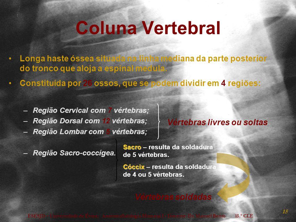 Coluna Vertebral Longa haste óssea situada na linha mediana da parte posterior do tronco que aloja a espinal medula.
