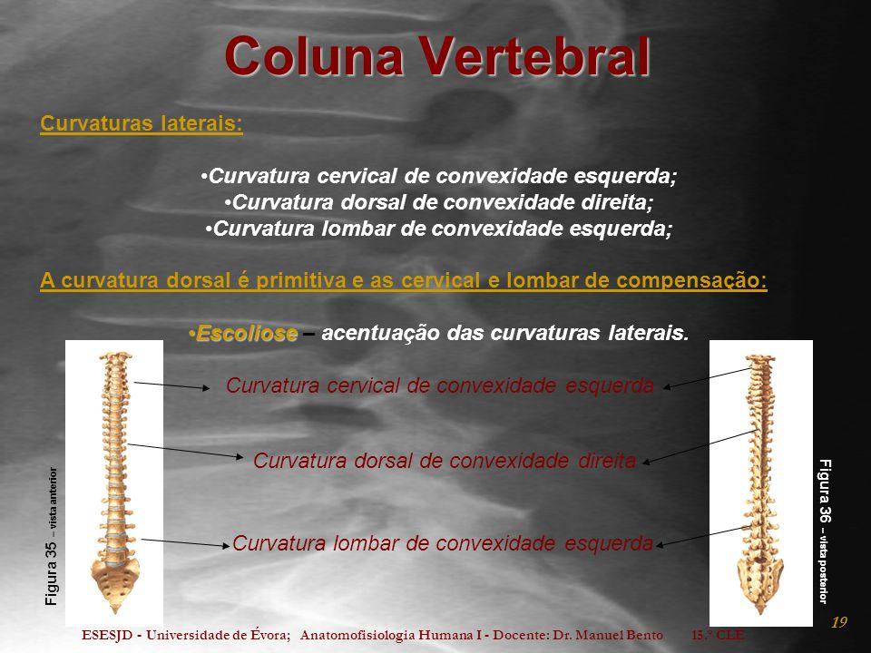 Coluna Vertebral Curvaturas laterais: