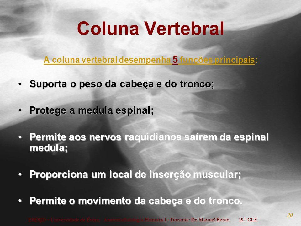 A coluna vertebral desempenha 5 funções principais: