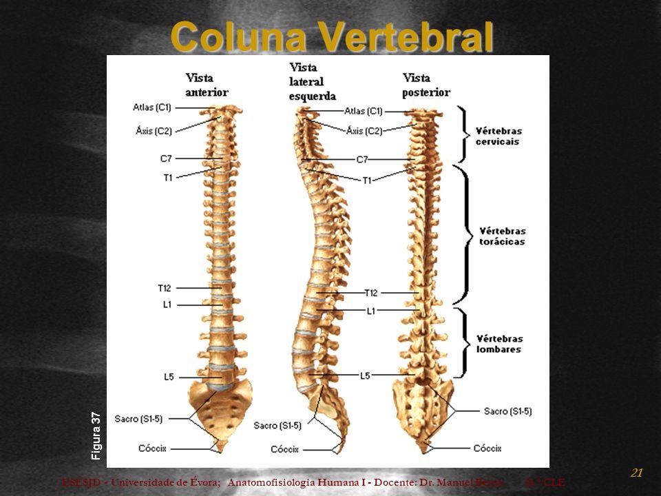 Coluna Vertebral Figura 37