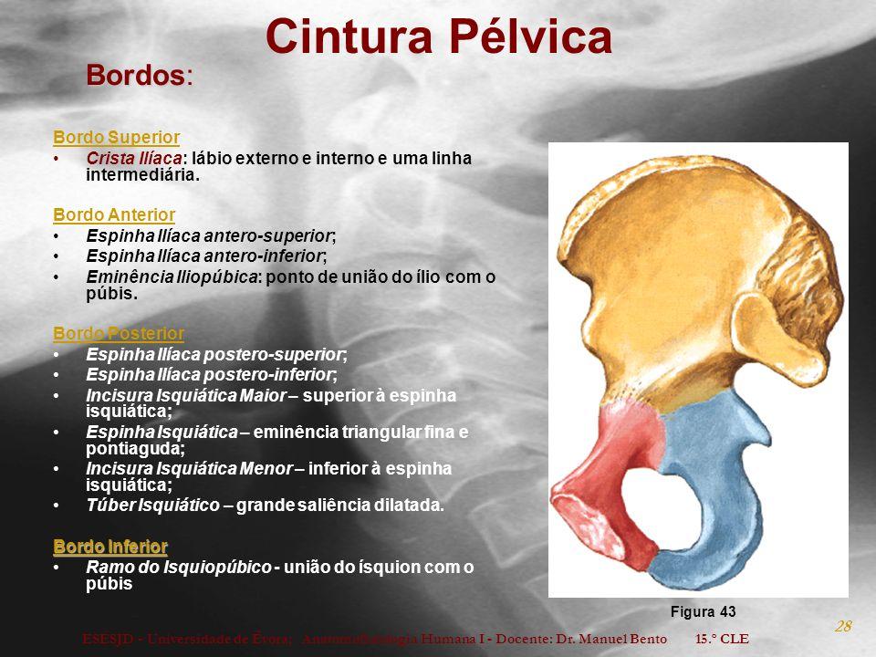 Cintura Pélvica Bordos: Bordo Superior
