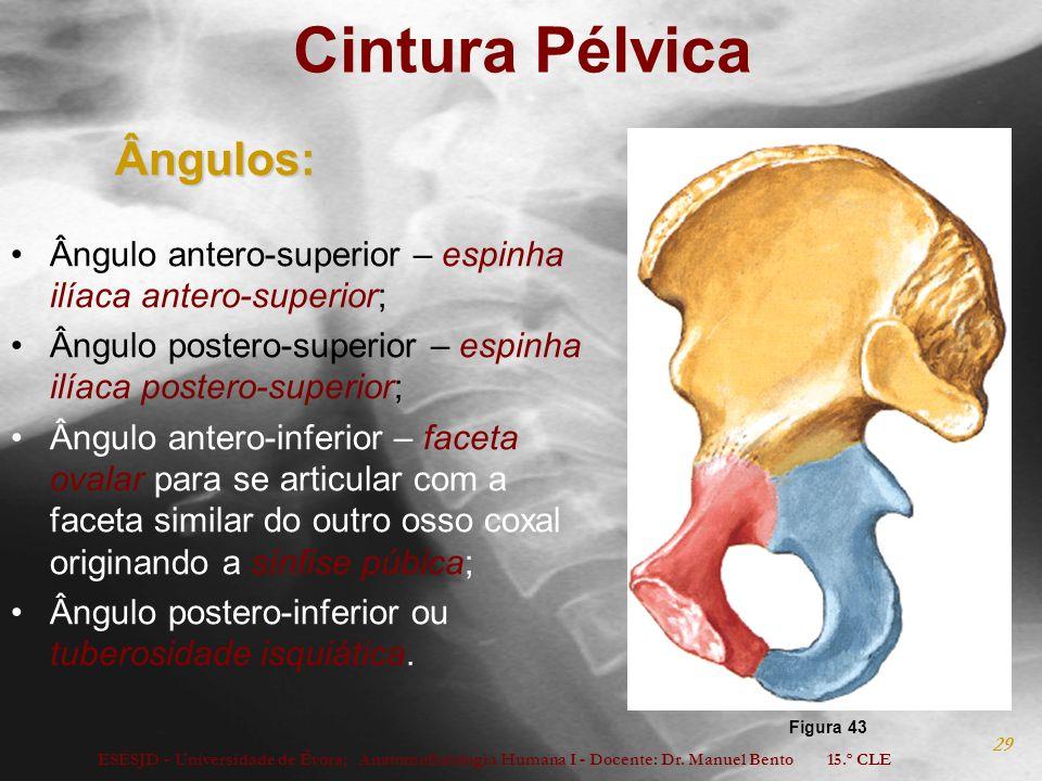 Cintura Pélvica Ângulos: