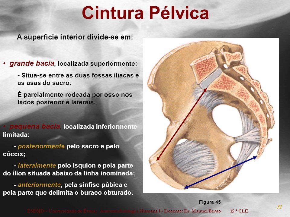 Cintura Pélvica A superfície interior divide-se em: