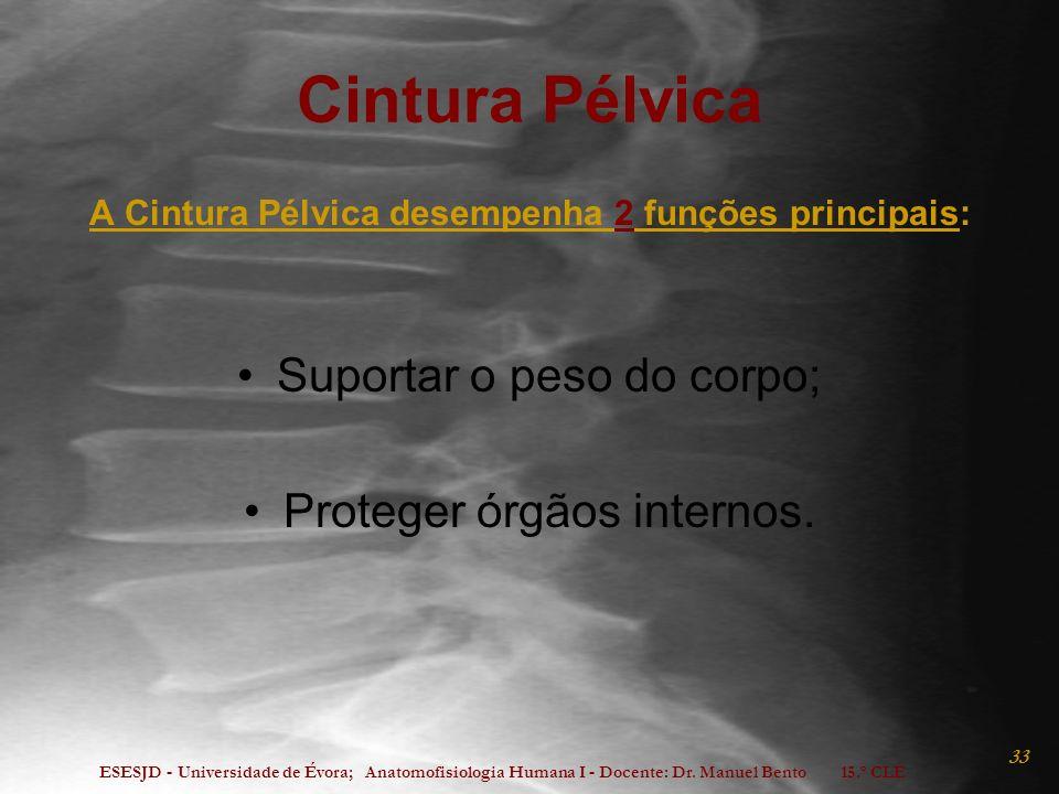 A Cintura Pélvica desempenha 2 funções principais: