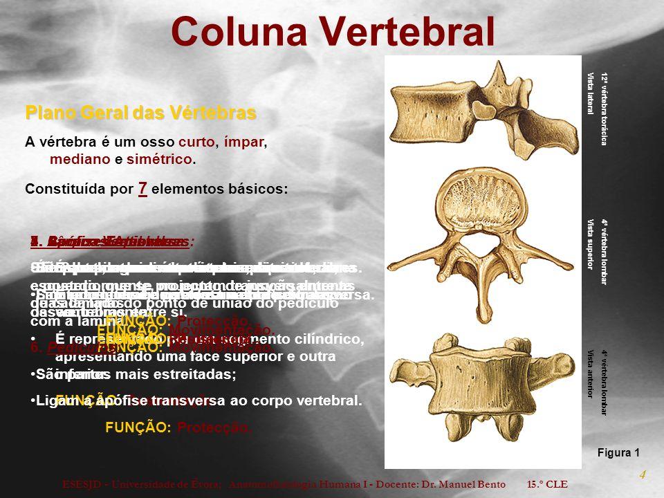 Coluna Vertebral Plano Geral das Vértebras