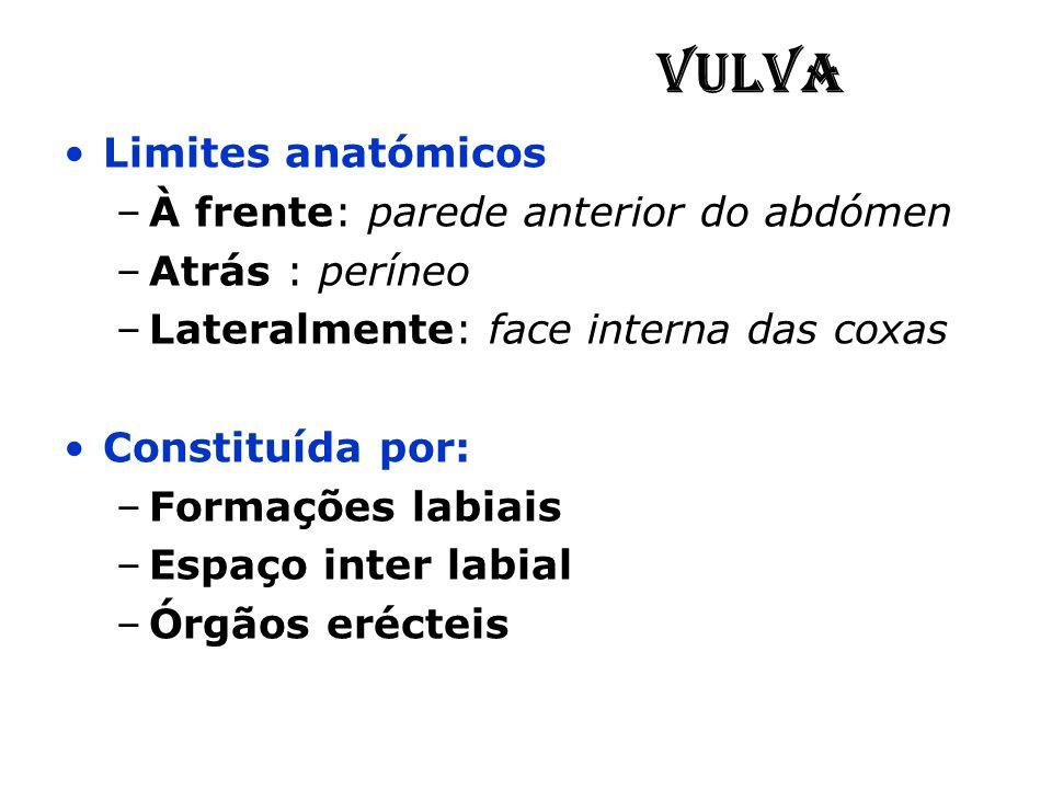 Vulva Limites anatómicos À frente: parede anterior do abdómen