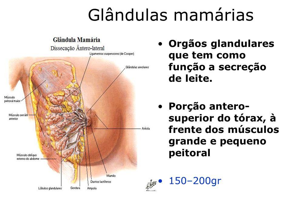 Glândulas mamárias Orgãos glandulares que tem como função a secreção de leite.