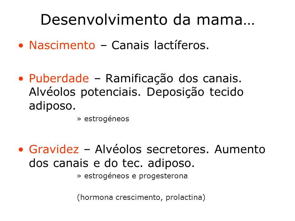 Desenvolvimento da mama…
