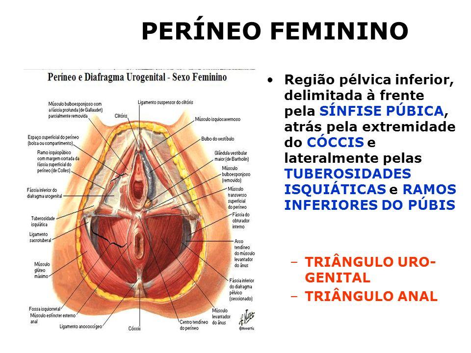PERÍNEO FEMININO