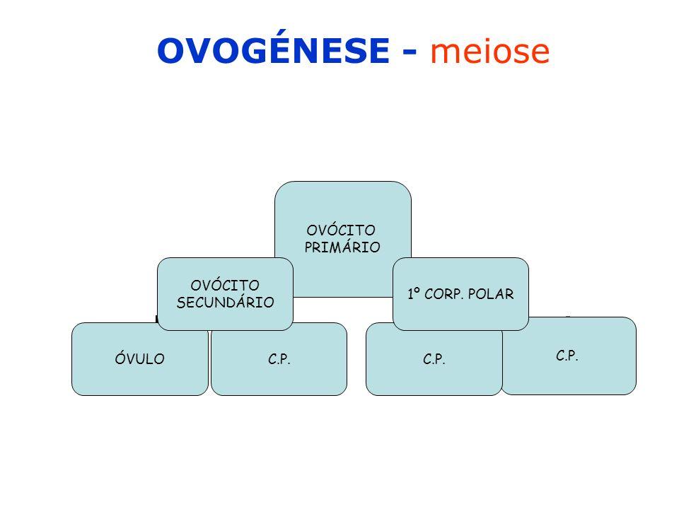 OVOGÉNESE - meiose