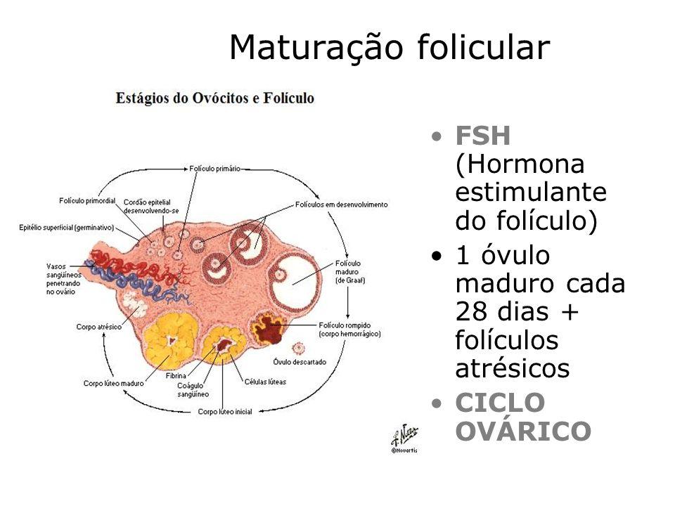 Maturação folicular FSH (Hormona estimulante do folículo)