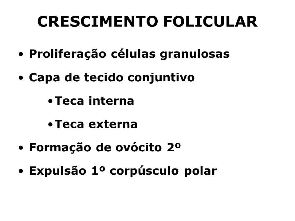 CRESCIMENTO FOLICULAR