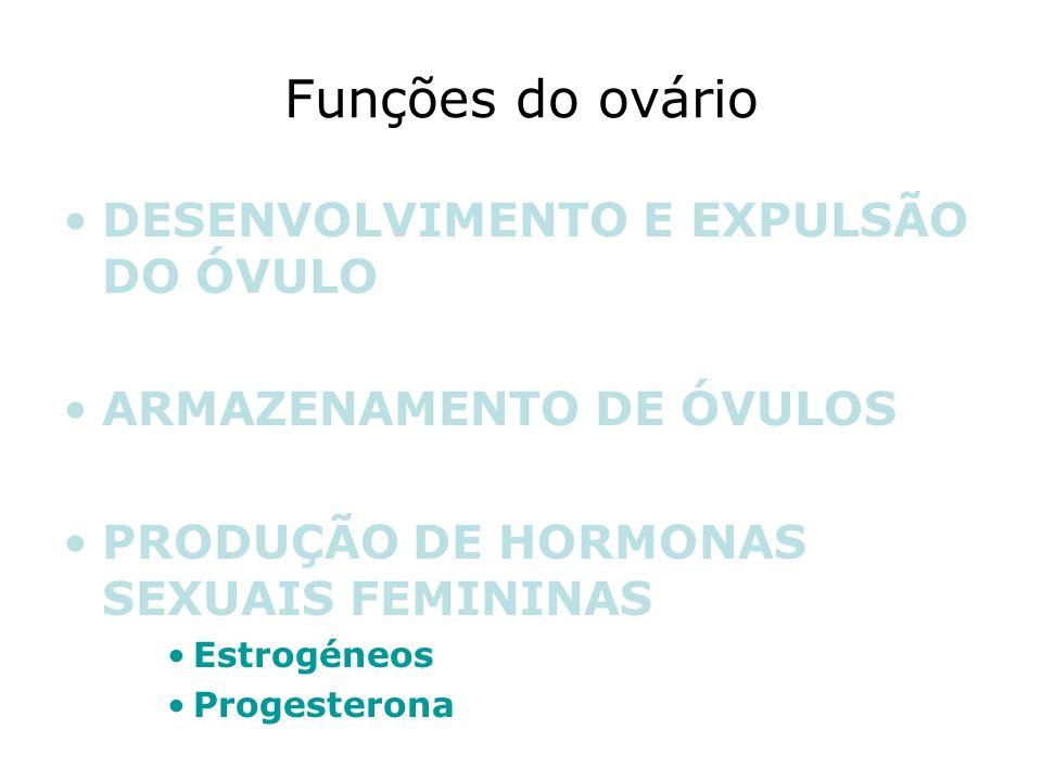 Funções do ovário DESENVOLVIMENTO E EXPULSÃO DO ÓVULO