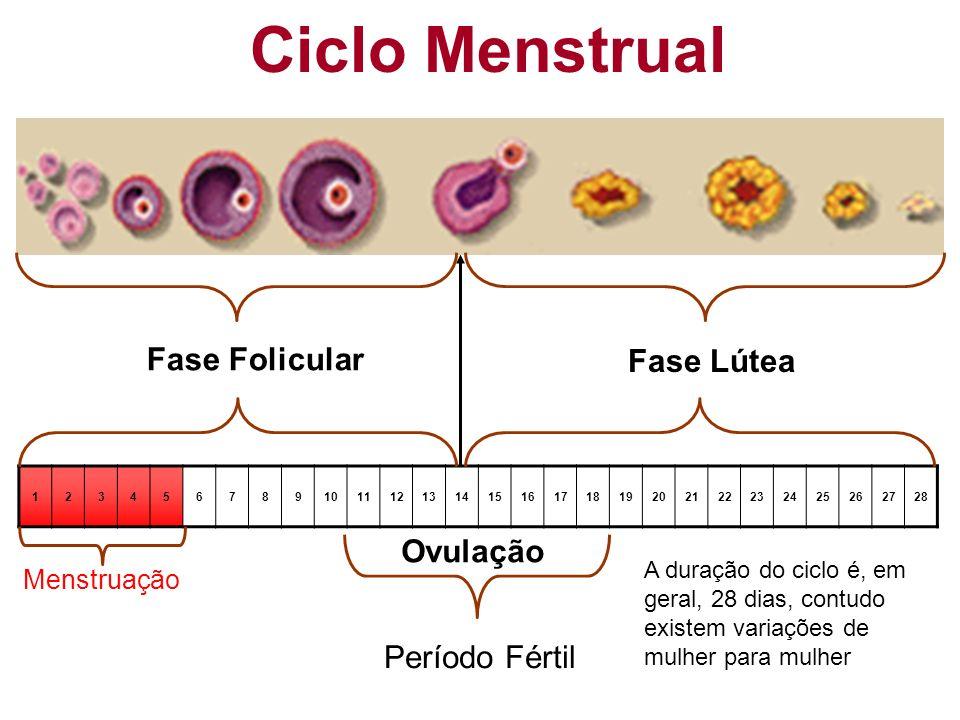 Ciclo Menstrual Fase Folicular Fase Lútea Ovulação Período Fértil