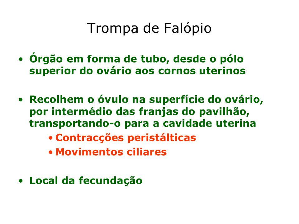 Trompa de Falópio Órgão em forma de tubo, desde o pólo superior do ovário aos cornos uterinos.