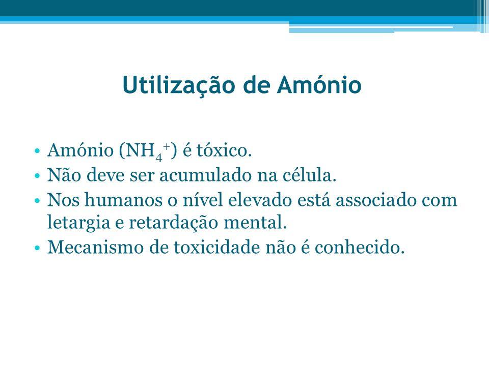 Utilização de Amónio Amónio (NH4+) é tóxico.