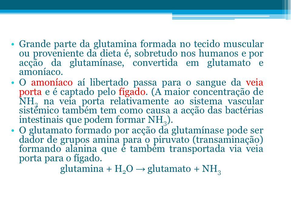 glutamina + H2O → glutamato + NH3