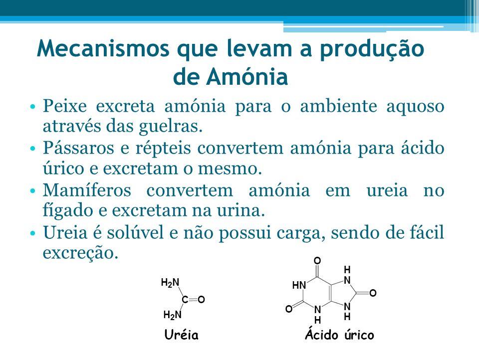 Mecanismos que levam a produção de Amónia