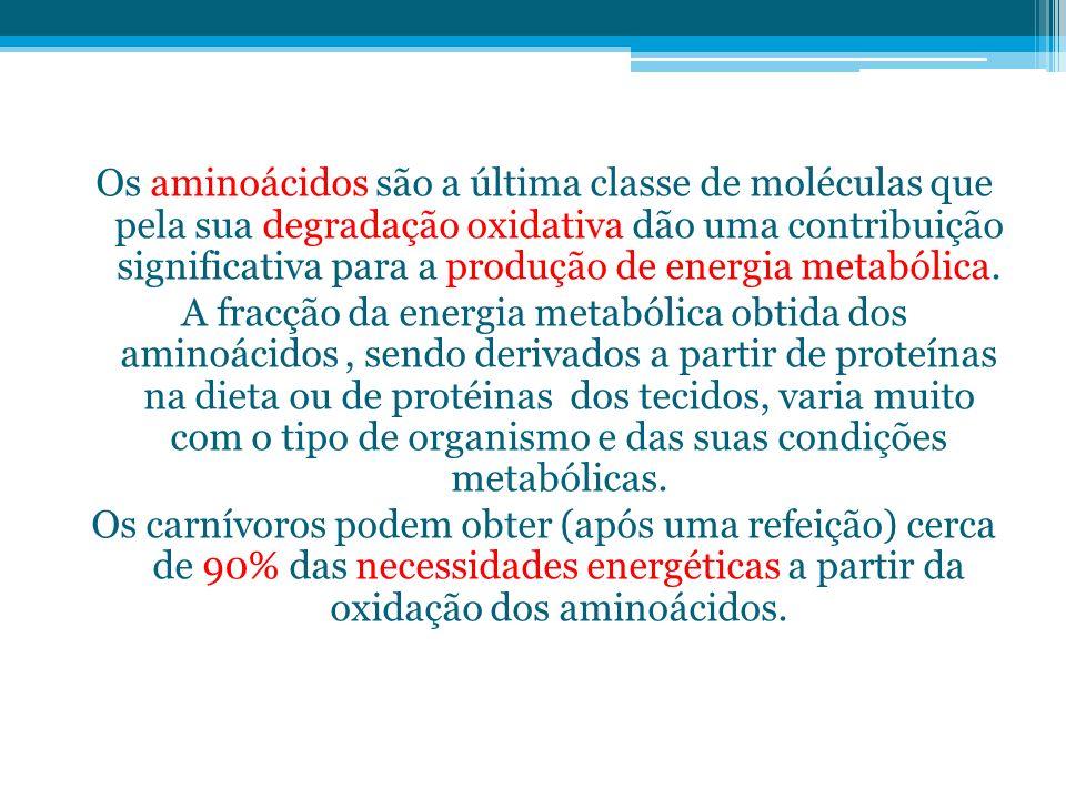 Os aminoácidos são a última classe de moléculas que pela sua degradação oxidativa dão uma contribuição significativa para a produção de energia metabólica.