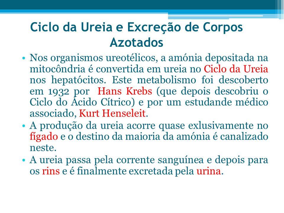 Ciclo da Ureia e Excreção de Corpos Azotados