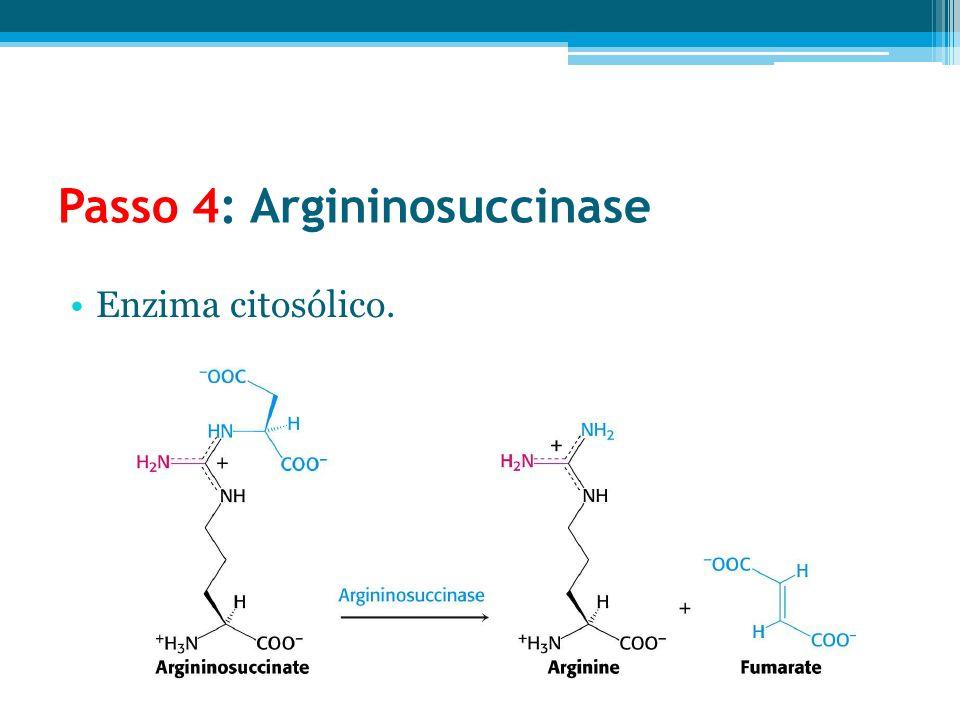 Passo 4: Argininosuccinase