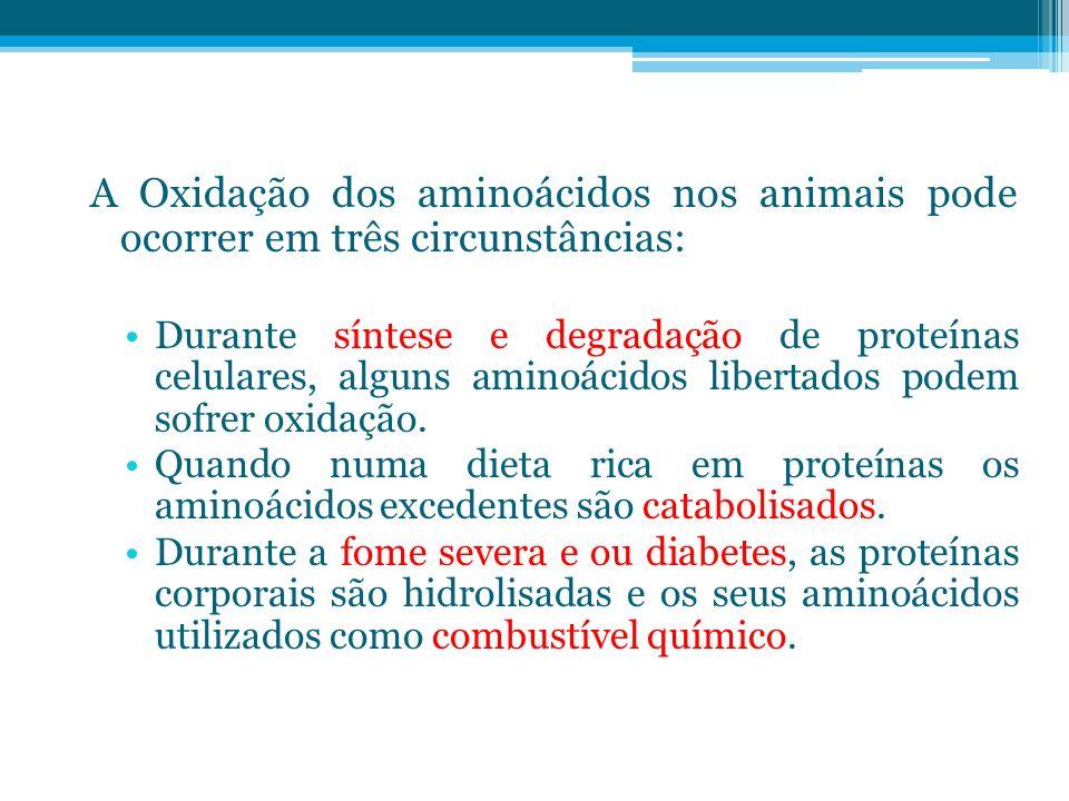 A Oxidação dos aminoácidos nos animais pode ocorrer em três circunstâncias: