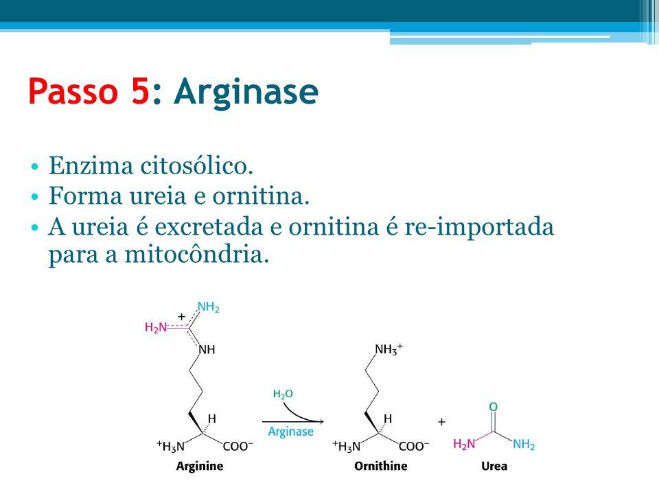 Passo 5: Arginase Enzima citosólico. Forma ureia e ornitina.