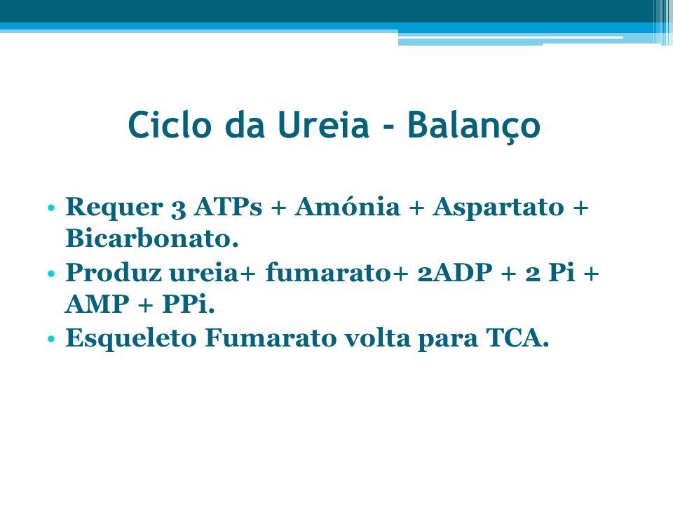 Ciclo da Ureia - Balanço